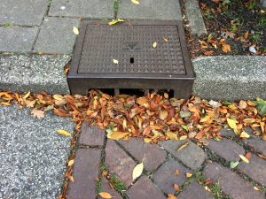 leaves in a drain in Amsterdam causing clogging problems
